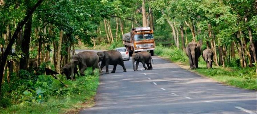 Lack of Rains makes Life miserable for Wild Animals in Hills